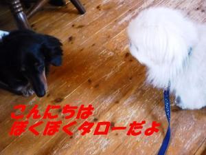 taro430_convert_20090502084731.jpg