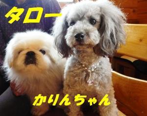 taro433_convert_20090502084830.jpg
