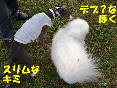 taro870_convert_20091025190301.jpg