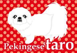 tarokun_convert_20090226133717.jpg