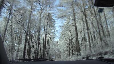 雪化粧した落葉松林を