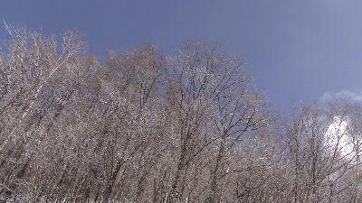 雪化粧した林