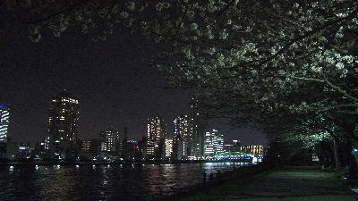 隅田川と聖路加ガーデン前の桜