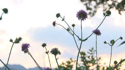 シンプリーガーデンで見た名も知らぬ花2
