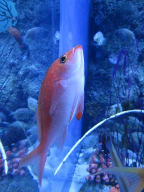 綺麗な海水魚♪