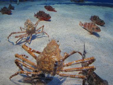 こちらは蟹とカサゴのぐーたらルーム?(笑)