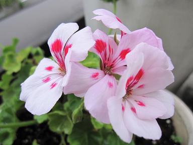 ピンクがふくふくで可愛い~♪