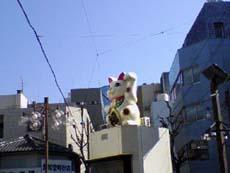 oosumanekineko.jpg
