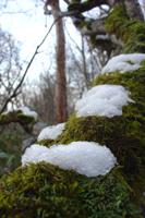 081030初雪