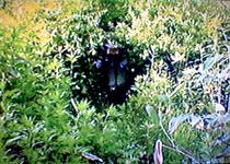 090711森のトンネル