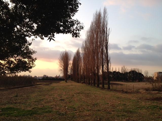 東大農場の風景