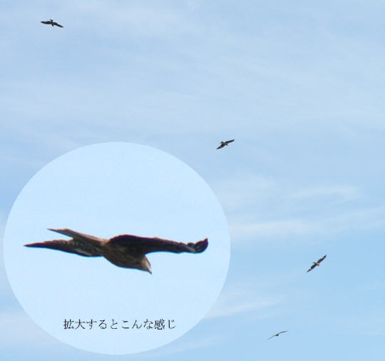 Sarushima06.jpg