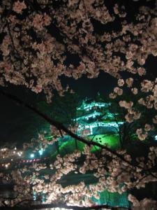 桜の合間からもう一枚