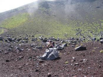 岩の上に座るマツ