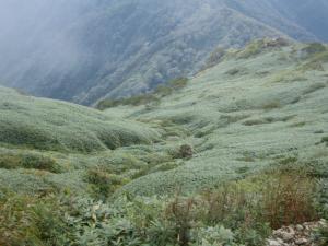 笹の群生地帯