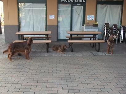 飼い主を待つ犬達