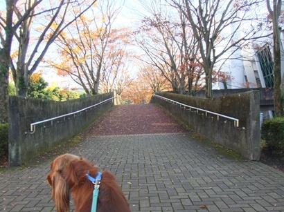 きれいな並木道