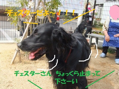 DSCF4049.jpg