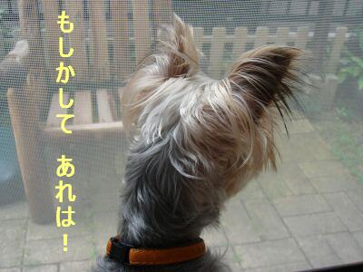 PHOTO255.jpg