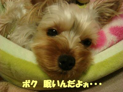 PHOTO282.jpg