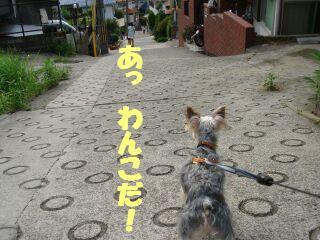 PHOTO296.jpg