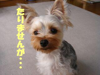 PHOTO374.jpg
