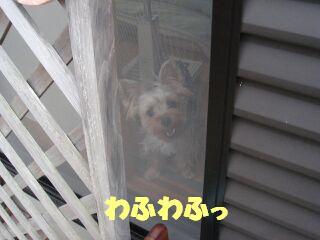 PHOTO383.jpg