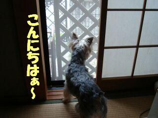 PHOTO384.jpg