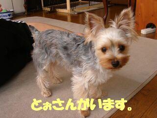 PHOTO385.jpg