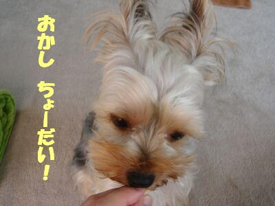 PHOTO405.jpg