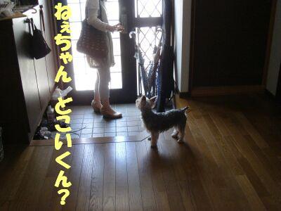 PHOTO409.jpg
