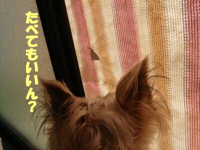 PHOTO410.jpg