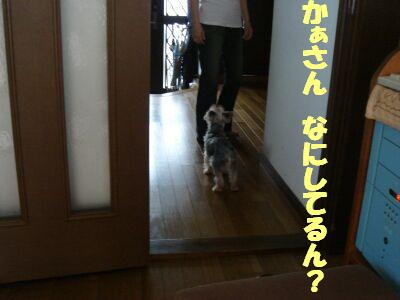 PHOTO413.jpg