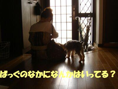 PHOTO416.jpg