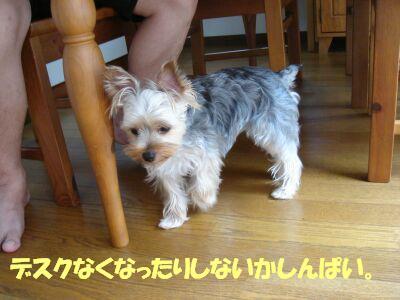 PHOTO420.jpg