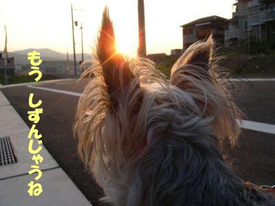 PHOTO429.jpg