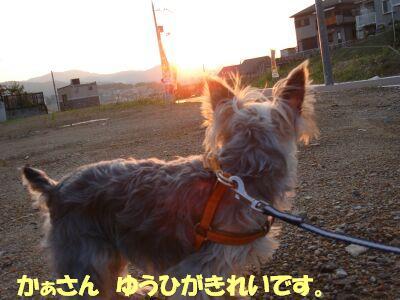 PHOTO433.jpg