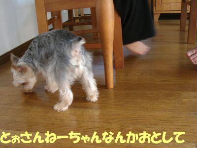 PHOTO436.jpg