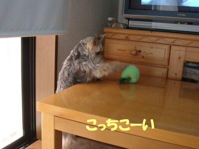 PHOTO445.jpg