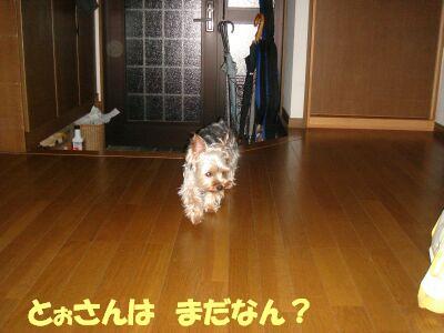 PHOTO453.jpg