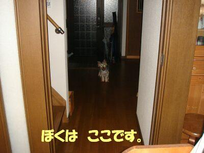 PHOTO454.jpg
