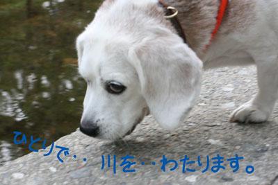 10_20081019130216.jpg