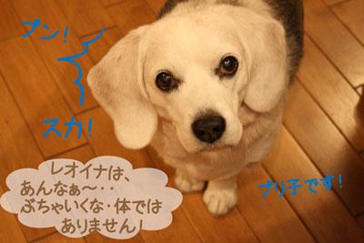 10_20081130194107.jpg