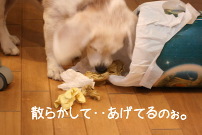 10_20081211224109.jpg