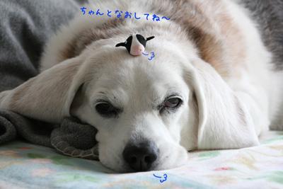 10_20081216014119.jpg