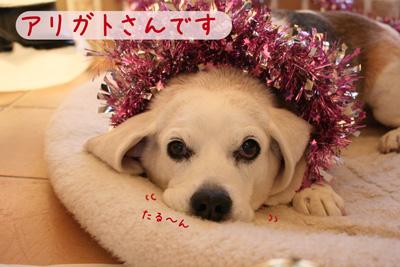 10_20081224173505.jpg