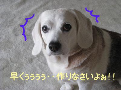 10_20090119182454.jpg