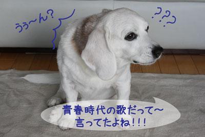 10_20090125235219.jpg