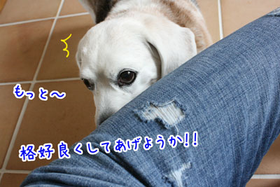 10_20090420181719.jpg