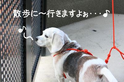 11_20081028195642.jpg